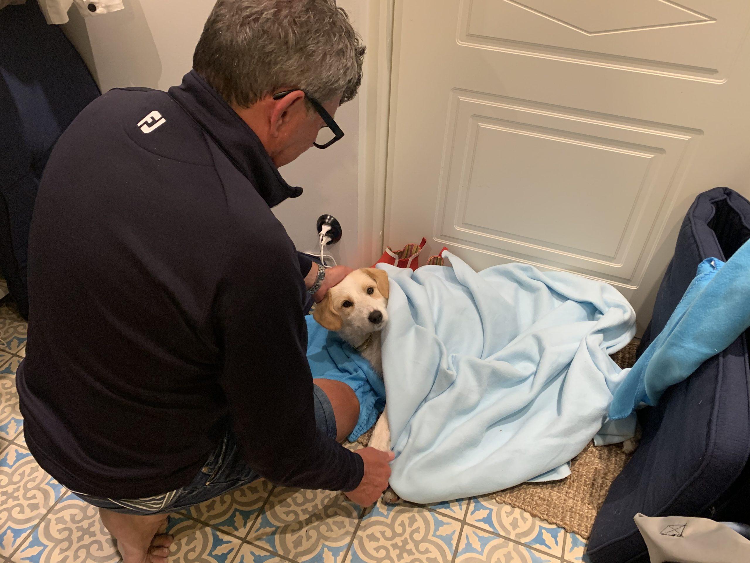 Rcky tar hand om nya hunden Kajsa