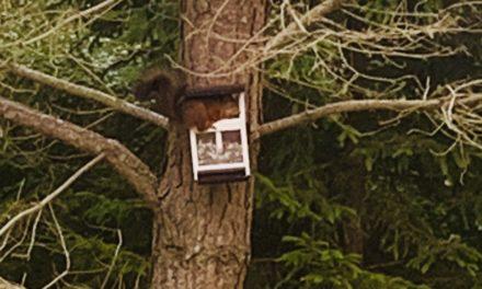 Richards räddningsaktion – rädda ekorren Ronny