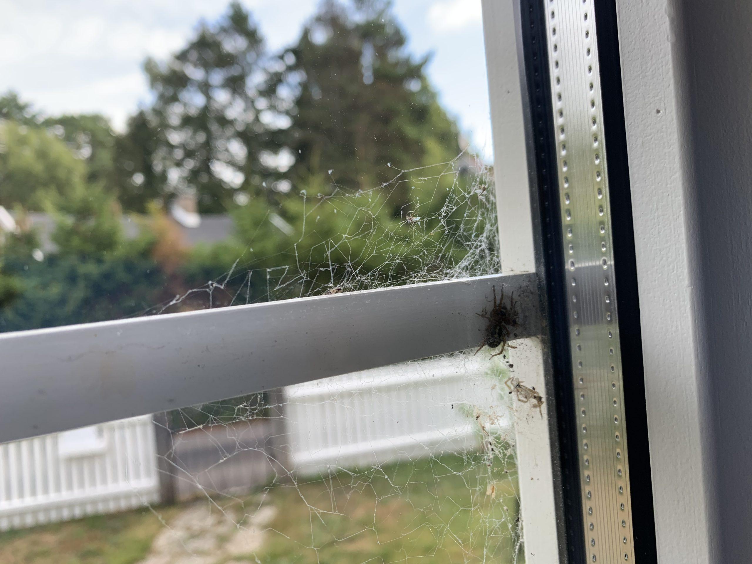 Spindel som krypit in under en spröjs i dörren